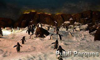 Faunia refresca las noches de verano con charlas nocturnas entre pingüinos cocodrilos y leones marinos