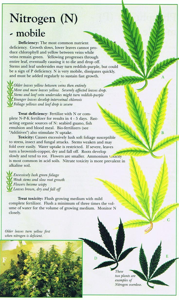 Cannabis Deficiency Guide Marijuana Weed Problems Leafs