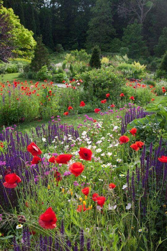 Stupendi fiori estivi