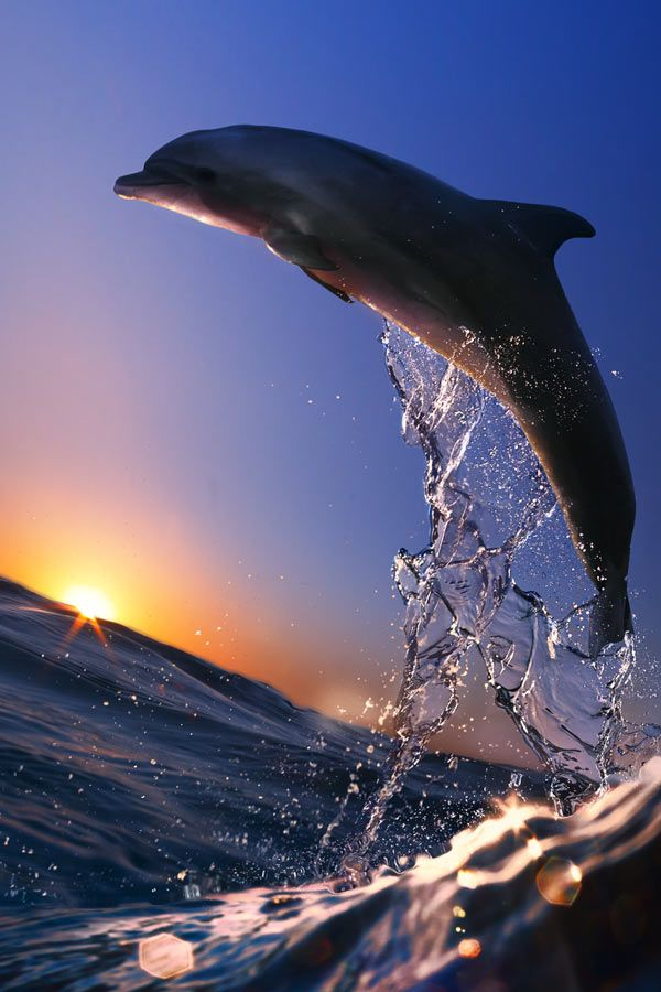 DOLPHINS IN HONOLULU !! Crowd sourced travel deals - CarryOn.com