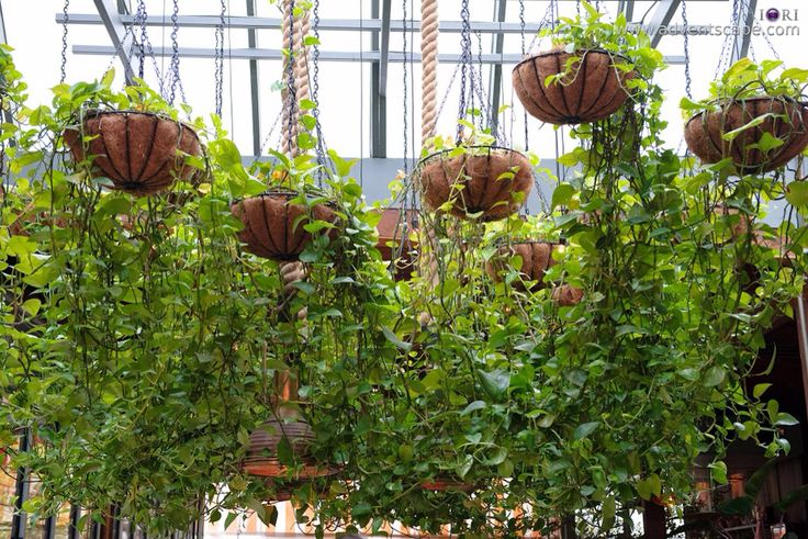 Hanging plants in The atrium at the Grounds of Alexandria. Perfect for an indoor feel for a Garden wedding.