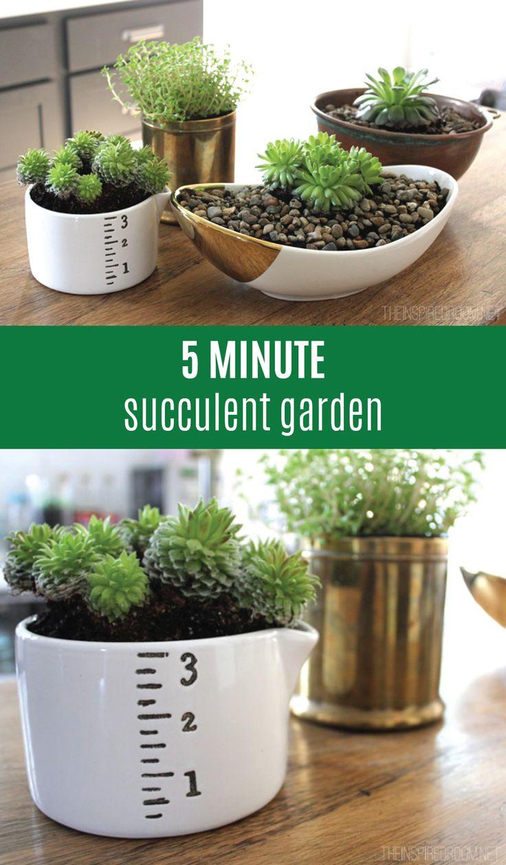 Best ideas about succulent bowls on pinterest