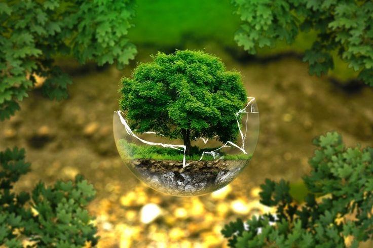 Digital composite image of tree in broken glass ball