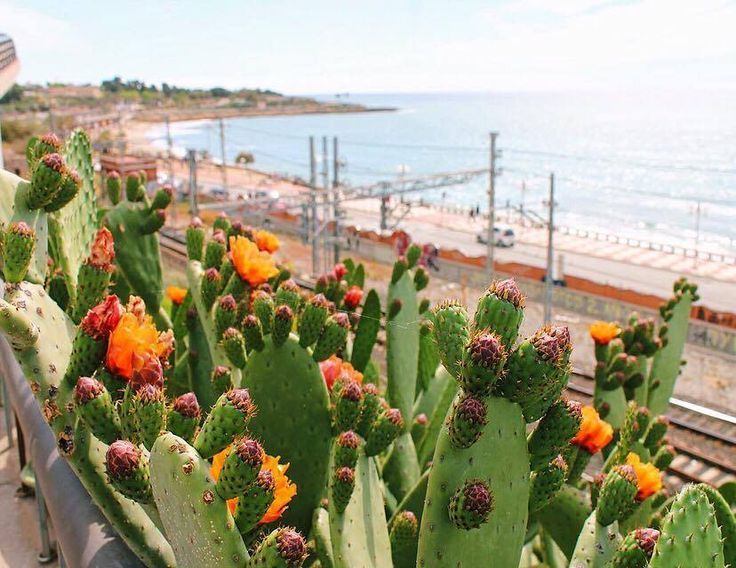Tarragona makes a great day trip from Barcelona! Design, plan, and book your Spanish honeymoon with Luna Moons