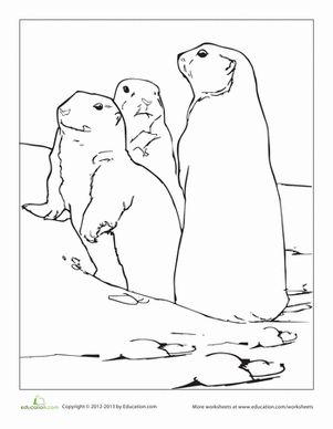 First Grade Animals Worksheets Prairie Dog Coloring Page