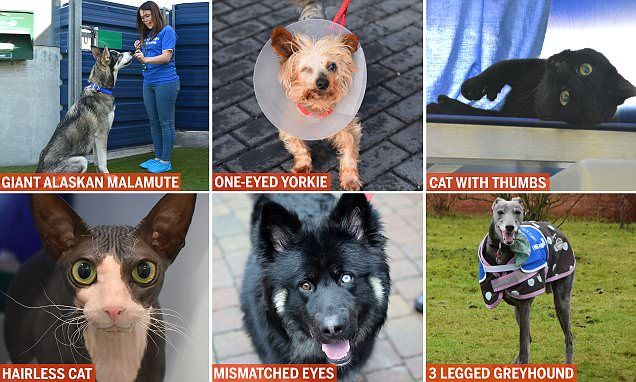 Battersea Dogs & Cats Home misfit pets are seeking forever homes