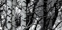 Wood - nyírfaerdő mintás öntapadós tapéta (45 cm x 15 m)