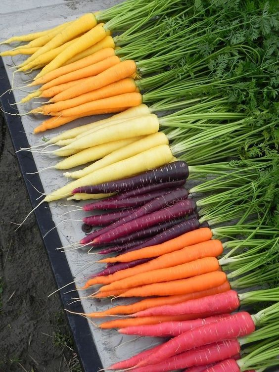 Heirloom Carrots with New World Carrots (the orange ones...look it up ;-) )