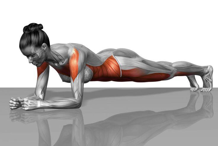 """Takzvaný """"plank"""" je jedno z nejpopulárnějších a zároveň nejefektivnějších cvičení na světě. Neovlivňuje pouze svaly na břiše, ale doslova v celém těle. Cvičte ho každý den 5 minut a sami budete překvapeni výsledkem."""