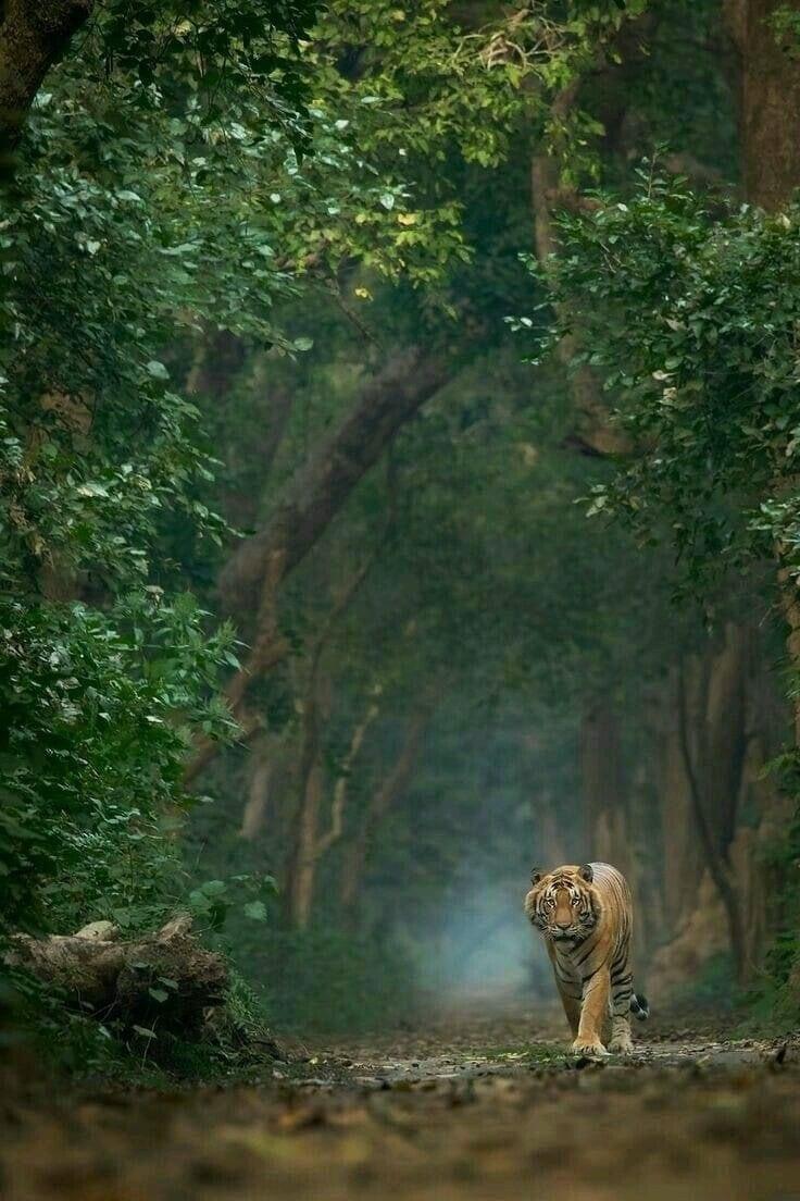 Pin By R Kumar On Animals Hd Wallpaper Animals Amazing Animals Wild Animal Planet