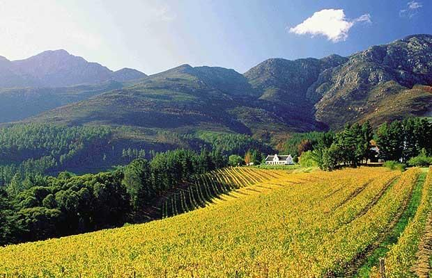 Cape town wine yards