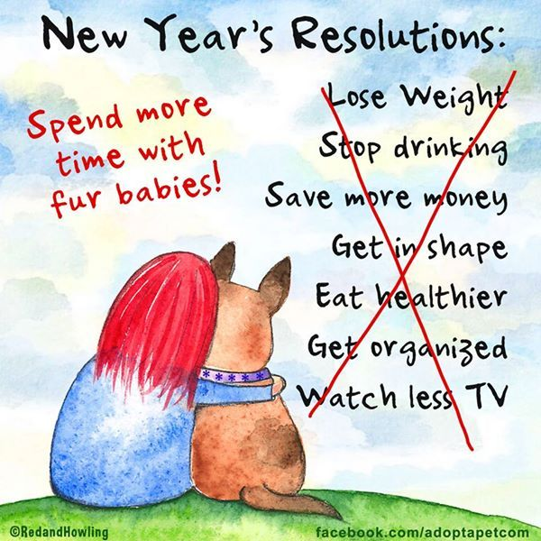 40 Facebook The Love Of Animals Pinterest Facebook Adorable Unique New Year Resolutions Quote