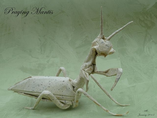 praying mantis research paper People often refer to any mantid as a praying mantis, but mantises are part of a  smaller group within the mantids praying mantids are carnivores, eating mainly  insects and other small animals many gardeners  scientific name  mantodea.