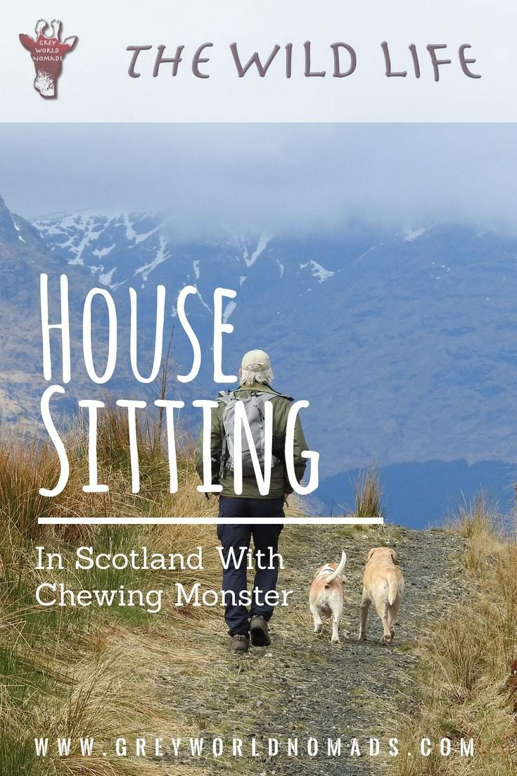 We were house sitting in Scotland when the desperate call of a young mother of a family with three children and lots of animals reached us. Oh, I hope so, that you are available. My planned house sitter let me down only a few days before the assignment! #housesitting #pets #animalcare