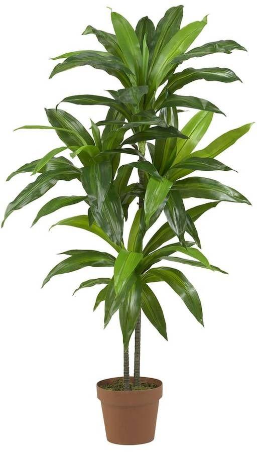 best 25 dracaena plant ideas on pinterest home air care. Black Bedroom Furniture Sets. Home Design Ideas