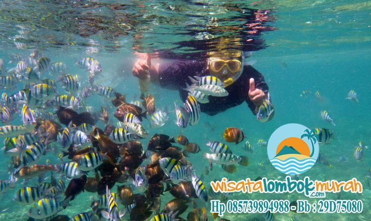 Lihat Surga Bawah Laut Gili Air Lombok, yang pastinya bakal buat kalian pengen kesini dan kesini lagi :D http://wisatalombokmurah.com/melihat-surga-bawah-laut-di-objek-wisata-gili-air/ #giliair #giliairlombok #wisatagiliair #wisatagiliairlombok #gili #wisatagili #gililombok