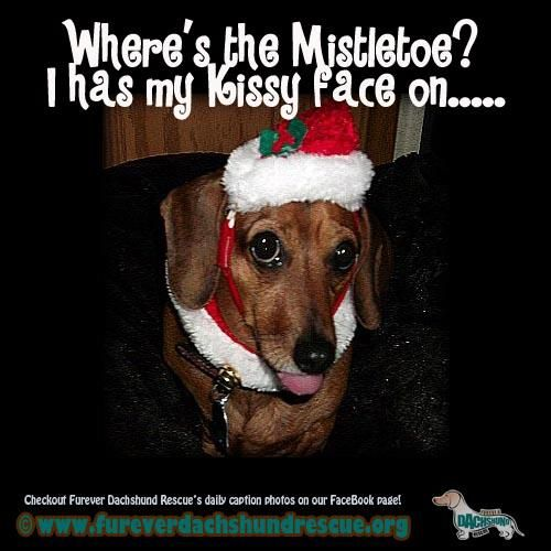 Like us on Facebook and look at all of our funny photos and cute dachshunds