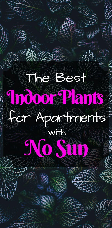 Low Light Indoor Plants | No Sun Houseplants |