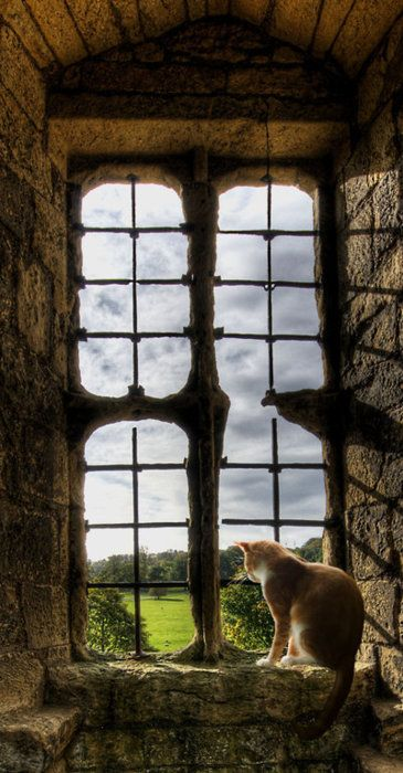 Freedom is the open window through which pours the sunlight of the human spirit and human dignity~ Herbert Hoover