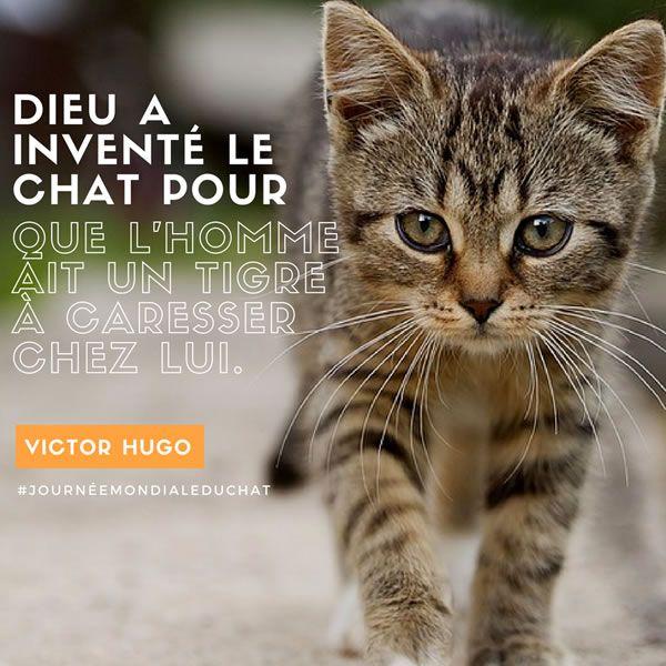 """Résultat de recherche d'images pour """"bon we humour"""""""