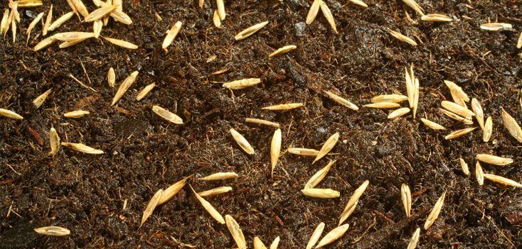 Planter du Gazon - jardin-et-plantes.fr en 2020   Planter gazon, Tonte de gazon, Gazon en rouleau