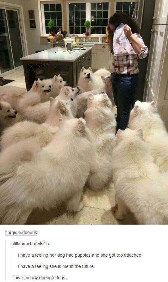 27 Incredibly Hilarious Dog Memes – Akita Inu und andere Hunde