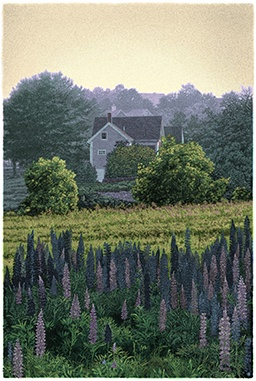 """This color ink jet print is a digital drawing which depicts a country cottage in Mid-coast Maine, a lilac hedge, a new-mown field, and a bank of wild pink and purple lupine flowers, all bathed in the golden light of summer.  It looks very much like a hand-colored etching with aquatint tones and hard-ground lines. Compare to """"At the End of the Day!"""" Available at http://www.marthavista.com  21 x 14"""""""