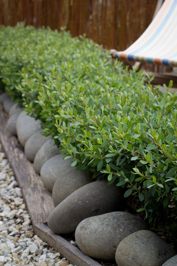the 25 best hedges landscaping ideas on on Small Garden Hedge Ideas id=90515