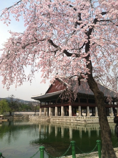 Gyeongbokgung Palace, Seoul, South Korea. To book go to www.notjusttravel.com/anglia