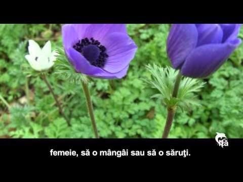 FEMEIA NICIODATĂ NU TREBUIE... - YouTube