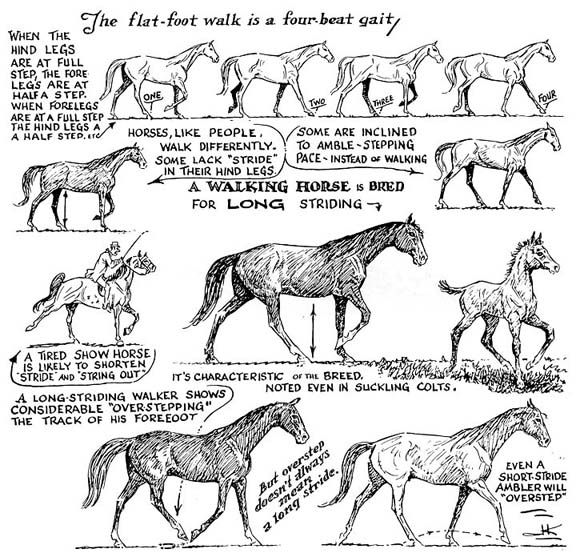 Walking Horse Trivia: The Unmistakable Tennessee Walking Horse