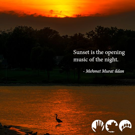"""""""sunset is the opening music of the night""""  