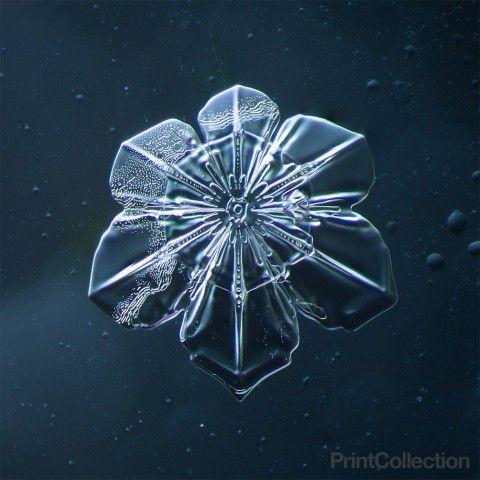 Snowflake by Douglas Levere