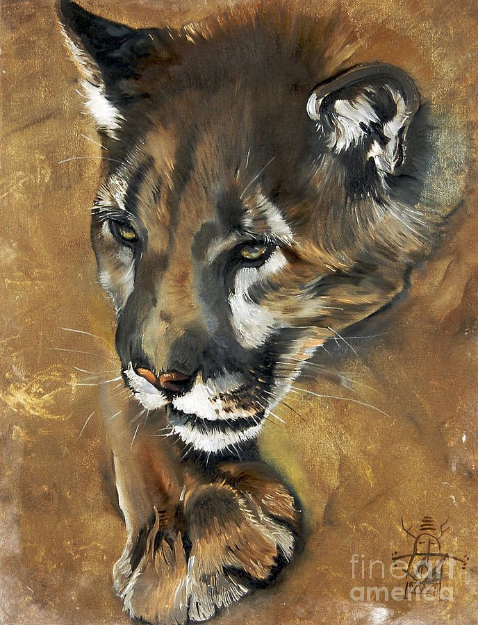 1000 Images About Paintings Of Wildlife And Nature On