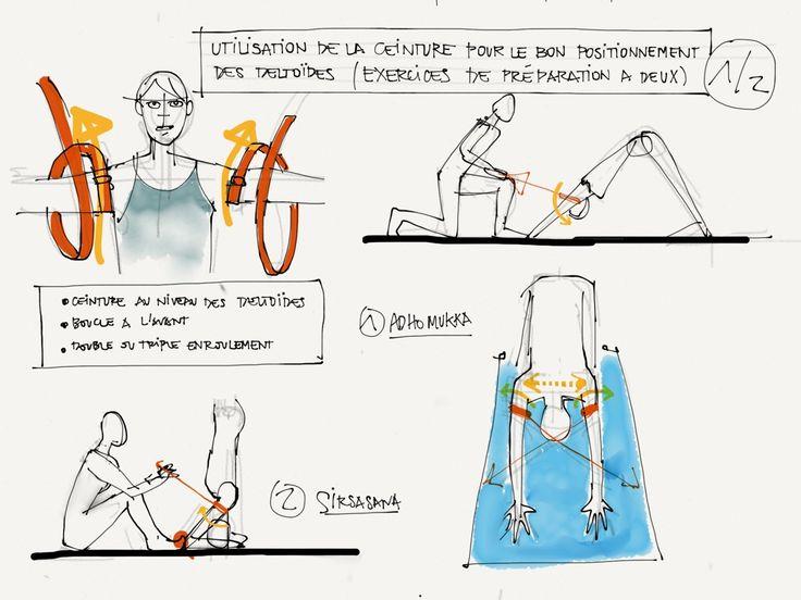 Les deltoïdes (ou les épaules dans le langage courant) désignent un ensemble de faisceaux de muscles qui s'étendent de la clavicule / acromion / partie supérieure de l'omoplate et en pa…