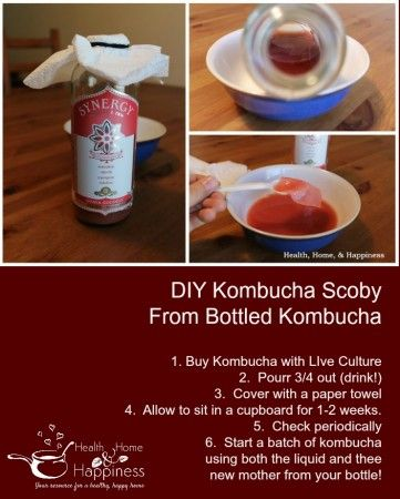 I Made a Kombucha Mother (SCOBY) from my Store Kombucha! | Health, Home, & Happiness