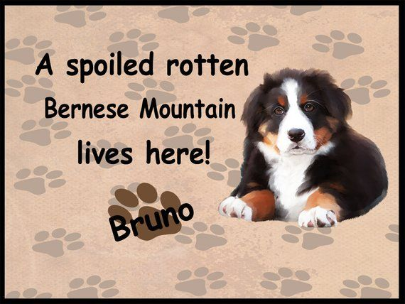 Bernese Mountain Dog Lives Here Floormat Dog Lovers Doormat Dog Photo Doormats Dog Doormat Dog Welcome Mat Dog Bernese Mountain Mountain Dogs Dog Life