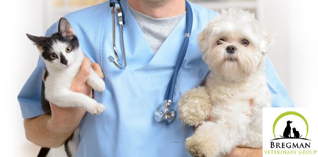 Looking for 24 hour vet in Brooklyn, NY? Bregman Veterinary group presents animal clinic offering 24 hour services. We provide quality treatments to your pets with full array of preventative veterinary medicine including wellness exams, vaccines, FELV/FIV and Heartworm testing, and flea and parasite control. For more visit us at. http://bregmanvetgroup.com/