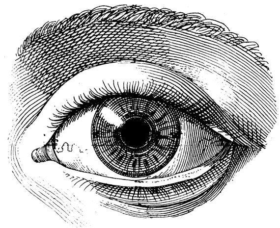 El ojo humano atlas médico viejo Ilustración imagen
