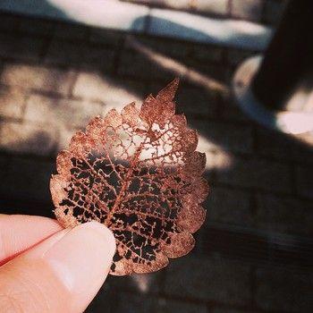 antika dantel gibi.  Ayrıca güzel düşmüş yaprakları çürüyen.  Günün albümü anıları bir fotoğraf koyduğunuzda, birlikte kolaj için kullanmak istiyorum.