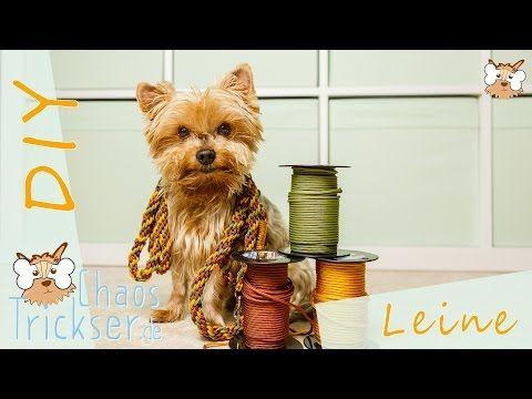 ▶ DIY    2m Leine, 3mal verstellbar    aus Paracord - YouTube