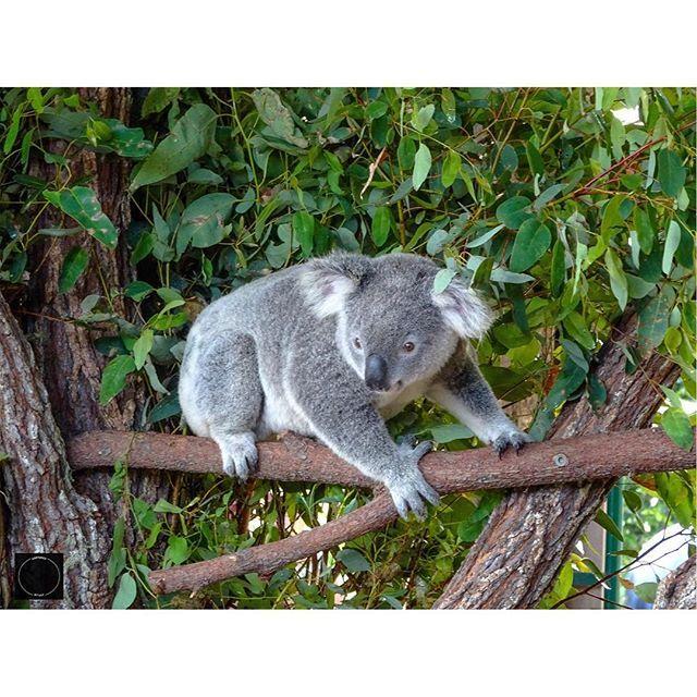 Furry friend - loved taking photos of the Koala bears  Gorgeous animals!