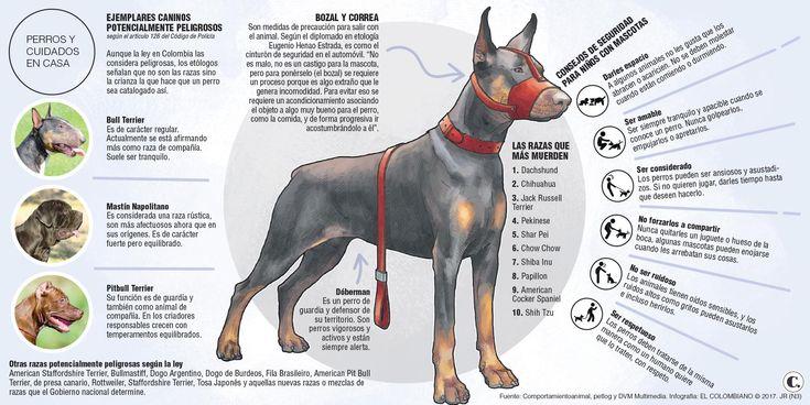 Dueños de pitbull y bull terrier a tener póliza y carné