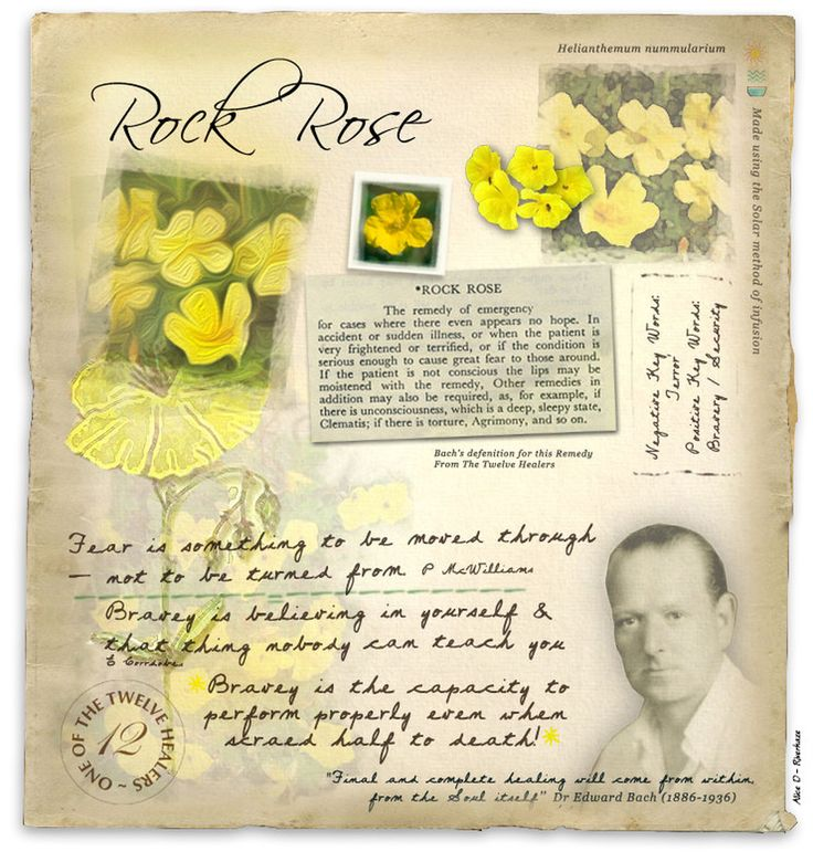 Rock Rose Helps when you experience fears, such as terror or fright that makes you feel frozen and unable to move or think clear.