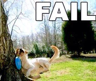 56051a32d910f299c428349ef77f3d63 frisbee fails 74 best fantastic fails images on pinterest funny animals