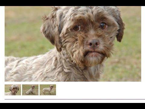شاهد العثور علي كلب بوجه إنسان فى  فى سابقة نادرة