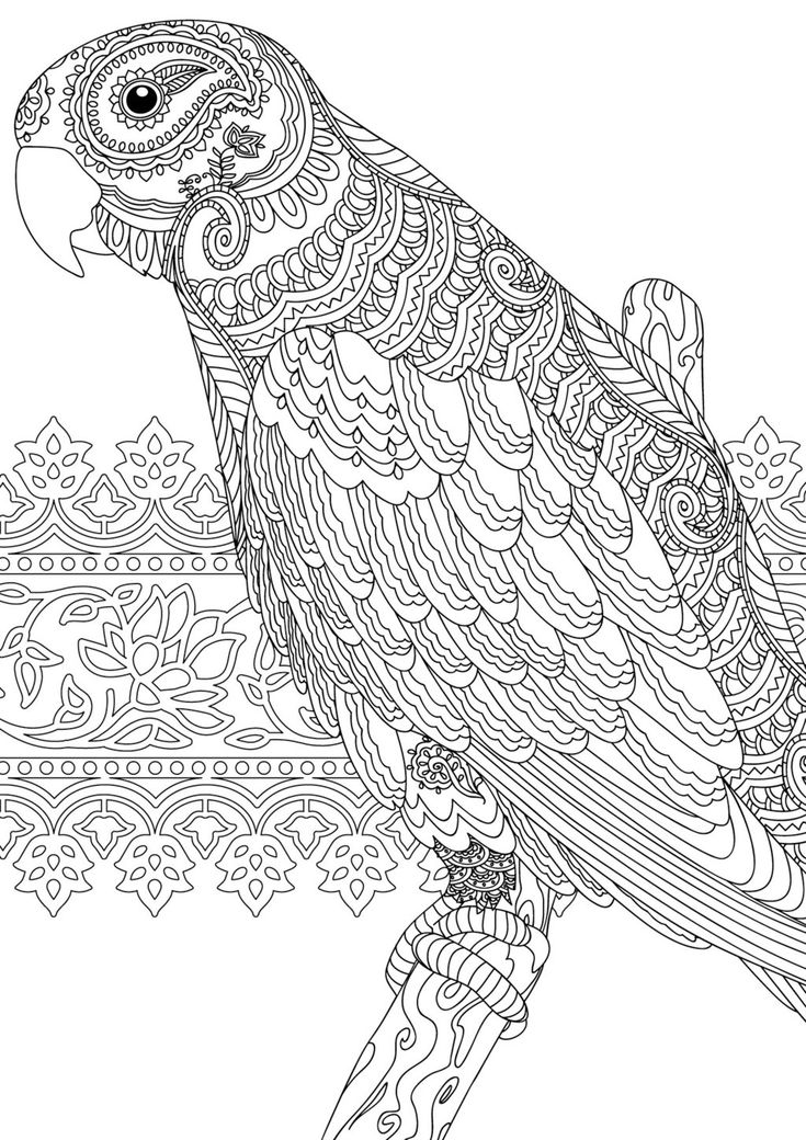 Indian Summer Parrot coloring page