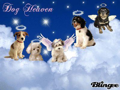 dog heaven tags angels clouds dog heaven