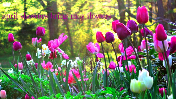 #may #spring #flowers