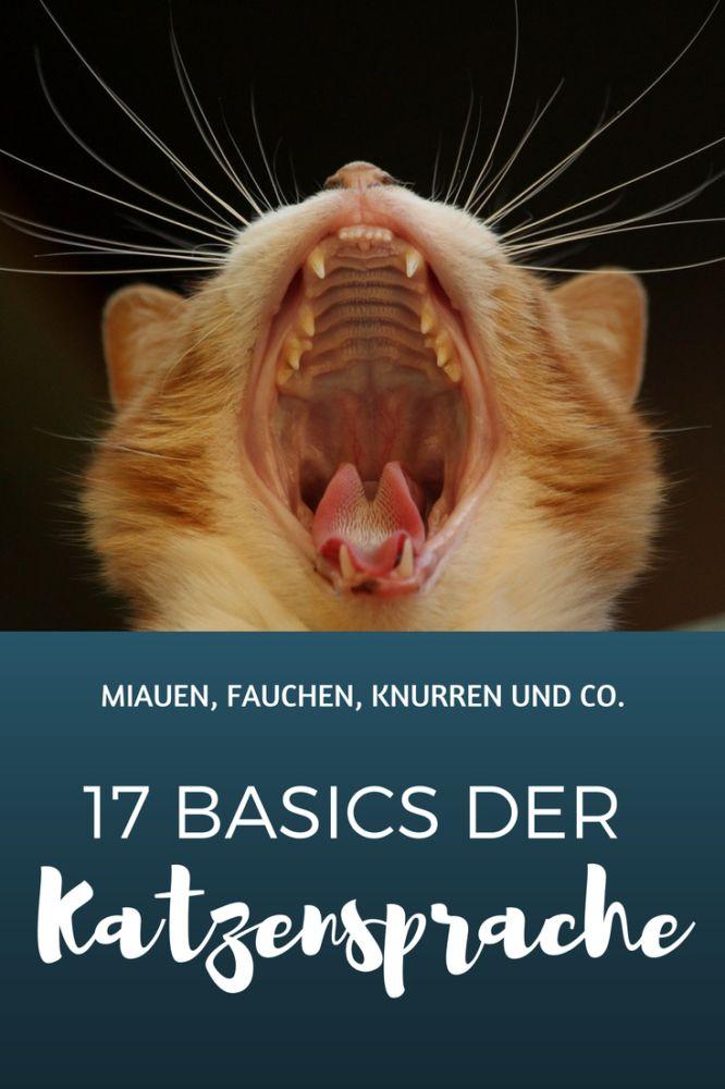 Katzensprache lernen: 17 Basics, die man kennen muss!